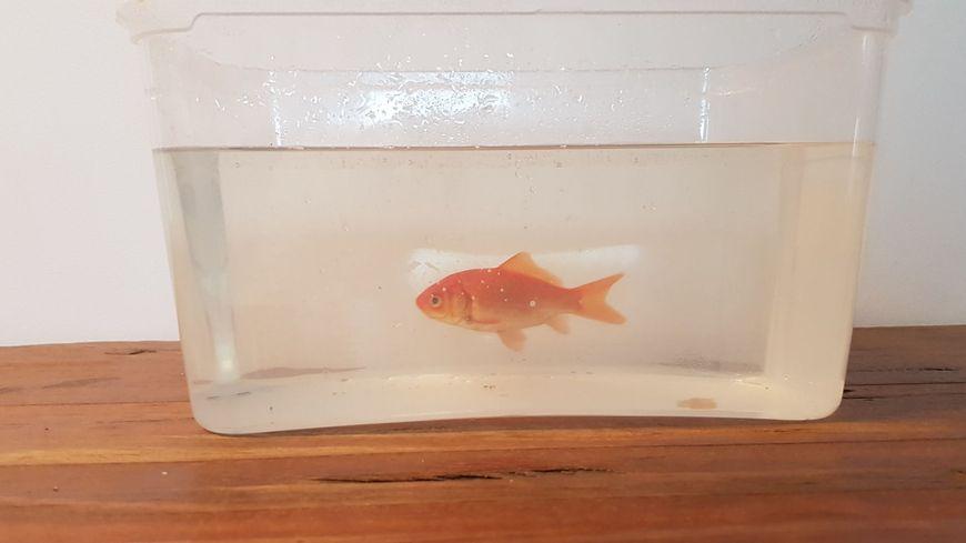 Moïse a trouvé un aquarium provisoire.