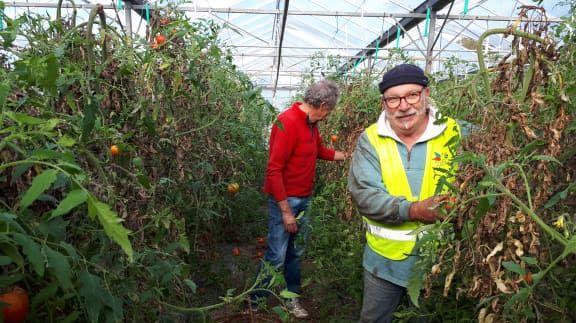 b878e2abec9ea0 En quelques heures les bénévoles du Secours populaire récupèrent des  centaines de kilos de tomates fraîches