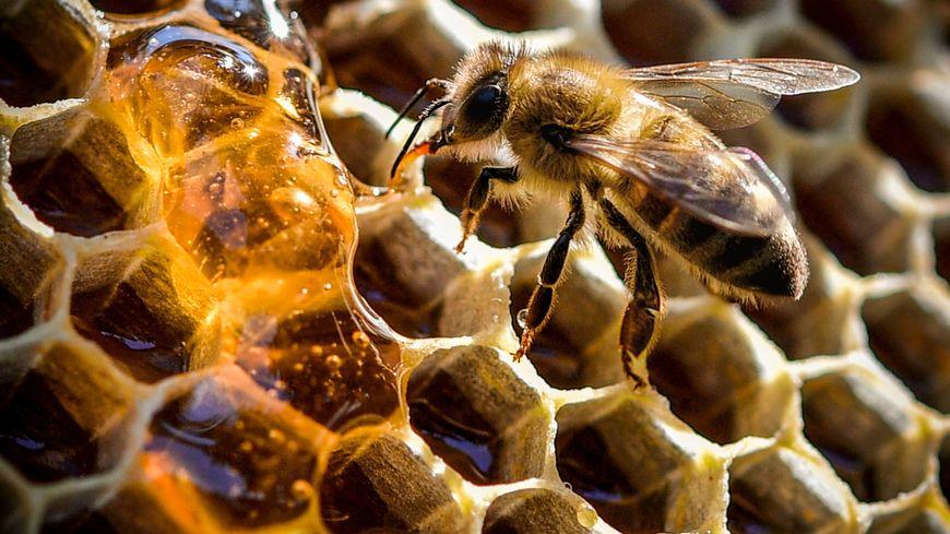 Une moyenne de 20 kilos de miel par ruche en 2018, contre 11 kilos l'an passé.