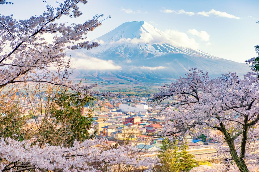 Fujiyoshida Town and Sakura Branches with Fuji Mountain