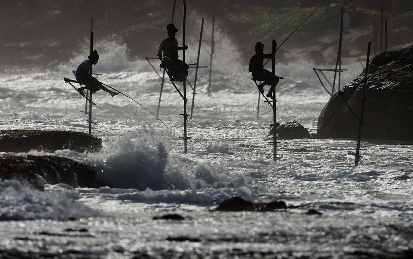 Pêcheurs Sri Lankais, 2017