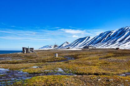 Des plantes de plus en grandes colonisent l'Arctique, signe du réchauffement climatique