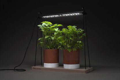 """""""Jean Racine"""", un luminaire design qui permet aux plantes de pousser toute l'année en intérieur..."""