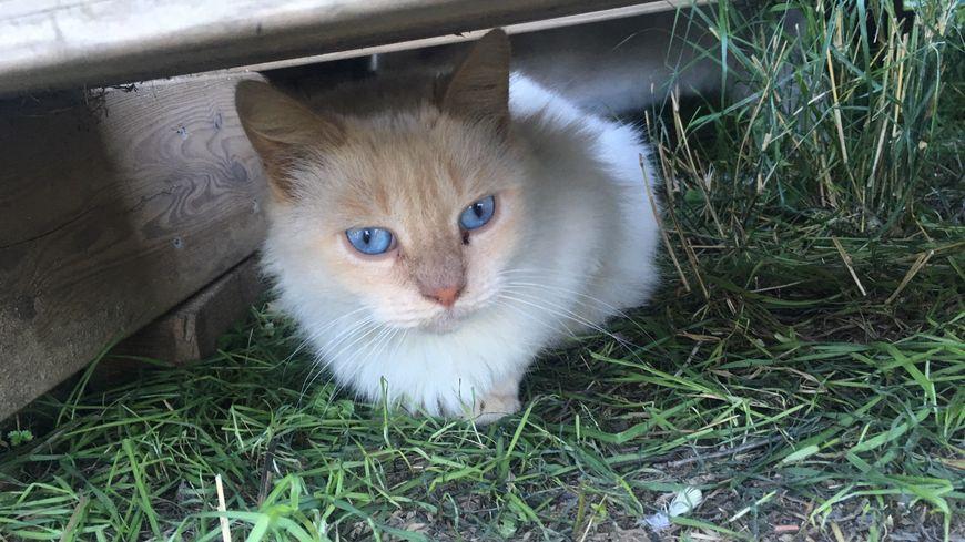 Les chats ont été récupéré par Marina, un refuge pour Ceret. Ils sont aujourd'hui en bonne santé