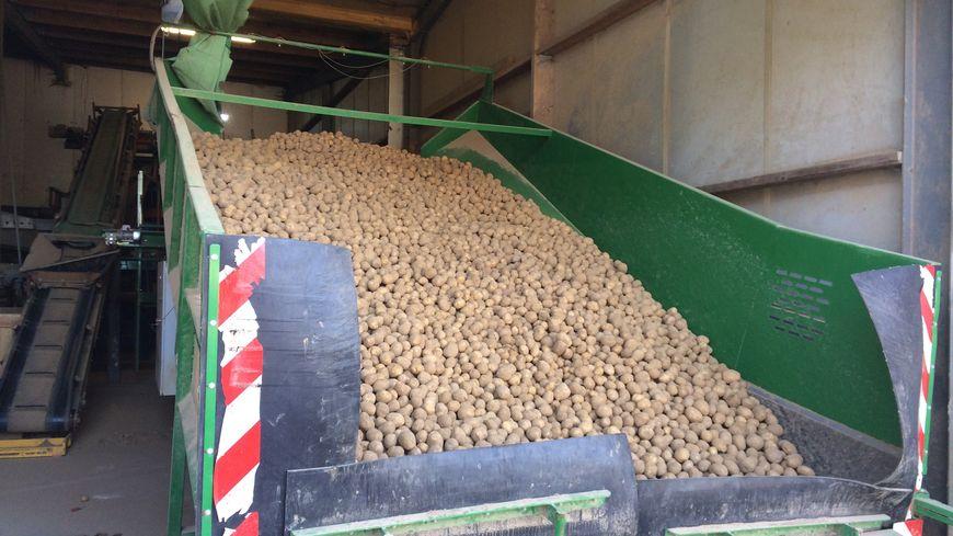Sur l'exploitation de Patrick Lecarpentier, 4 000 tonnes de pomme de terre sont produite chaque année à destination du monde entier