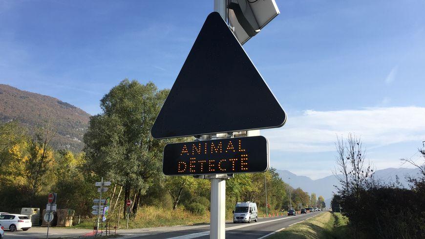Les panneaux lumineux avertissent les automobilistes de la présence d'animaux