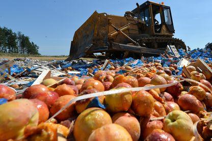 Un bulldozer écrase des tonnes de pêches saisies à Novozybkov (août 2015 )