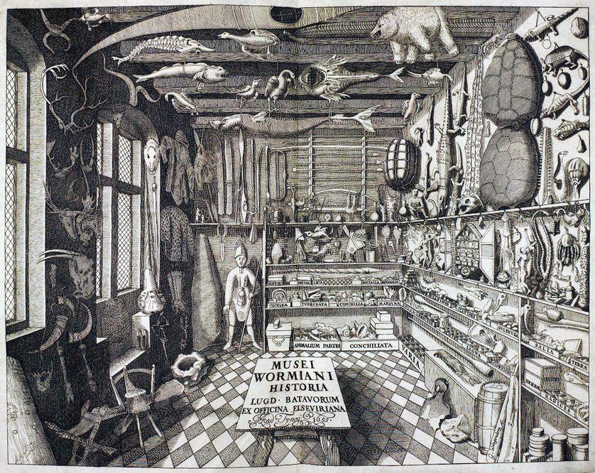Cabinet de curiosités de Worm