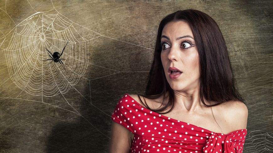 La phobie des araignées : apprenez à la maîtriser