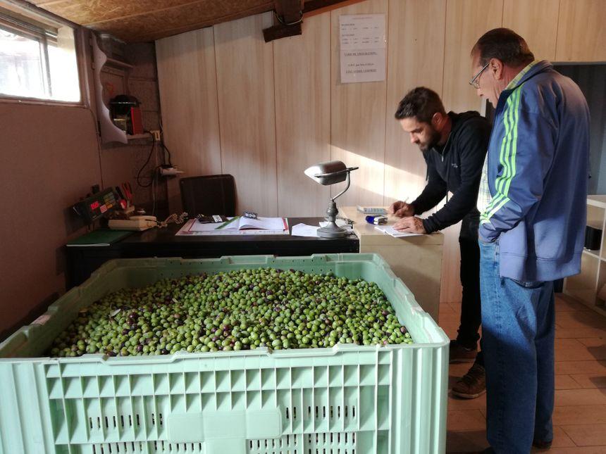 Première étape pour Olivier Marrou, le maître moulinier : peser les olives des propriétaires.