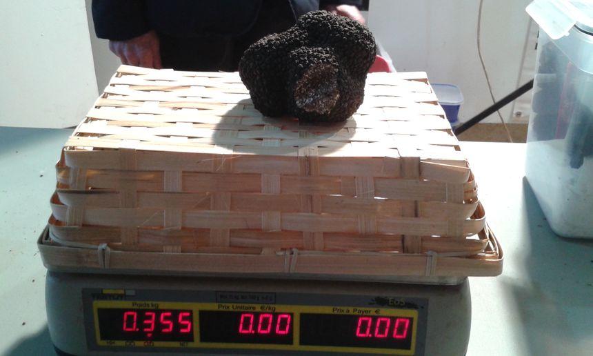La plus grosse truffe du marché de Noyers-sur-Serein, le 28 octobre 2018 : 265 grammes (355 avec le panier !)