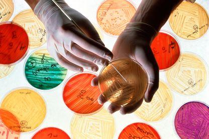 Recherches sur les bactéries