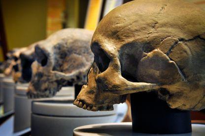 Crâne de neandertal