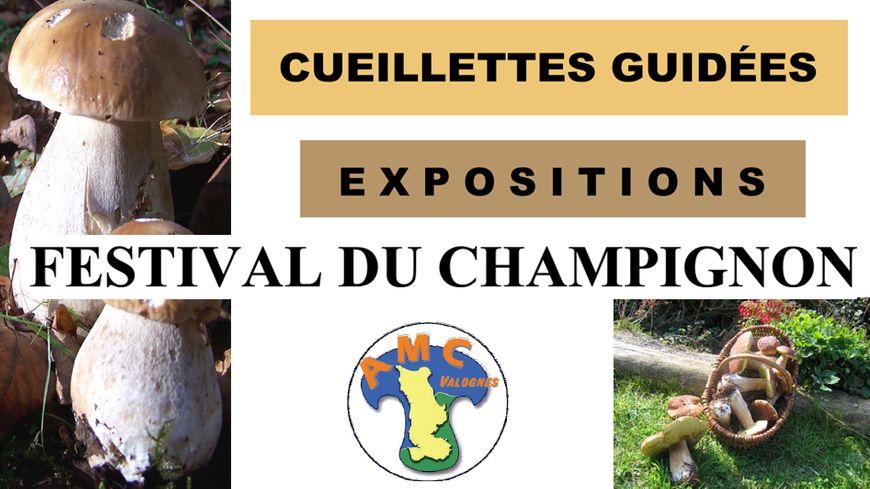 Festival du champignon à Valognes avec France Bleu Cotentin