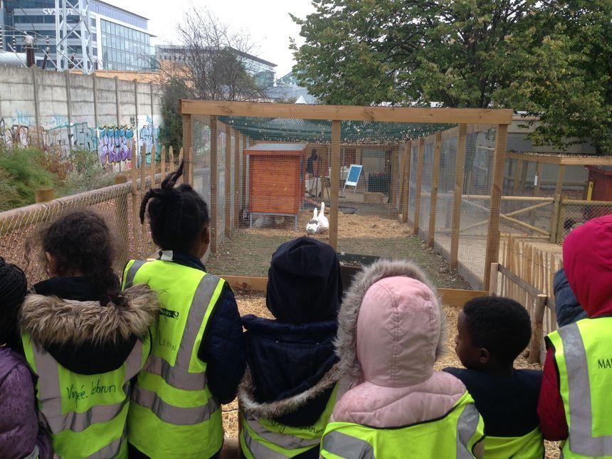 Une quarantaine d'enfants ont rendu visite aux animaux