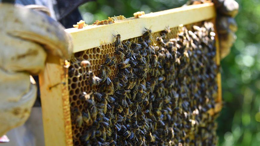 Un tiers des colonies d'abeilles sont mortes au cours de l'hiver 2017/2018.