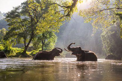 Plus de la moitié des animaux sauvages ont disparu de la terre depuis 1970