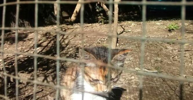 Certains animaux ont été recueillis par l'association gardoise Pour l'amour des chats.