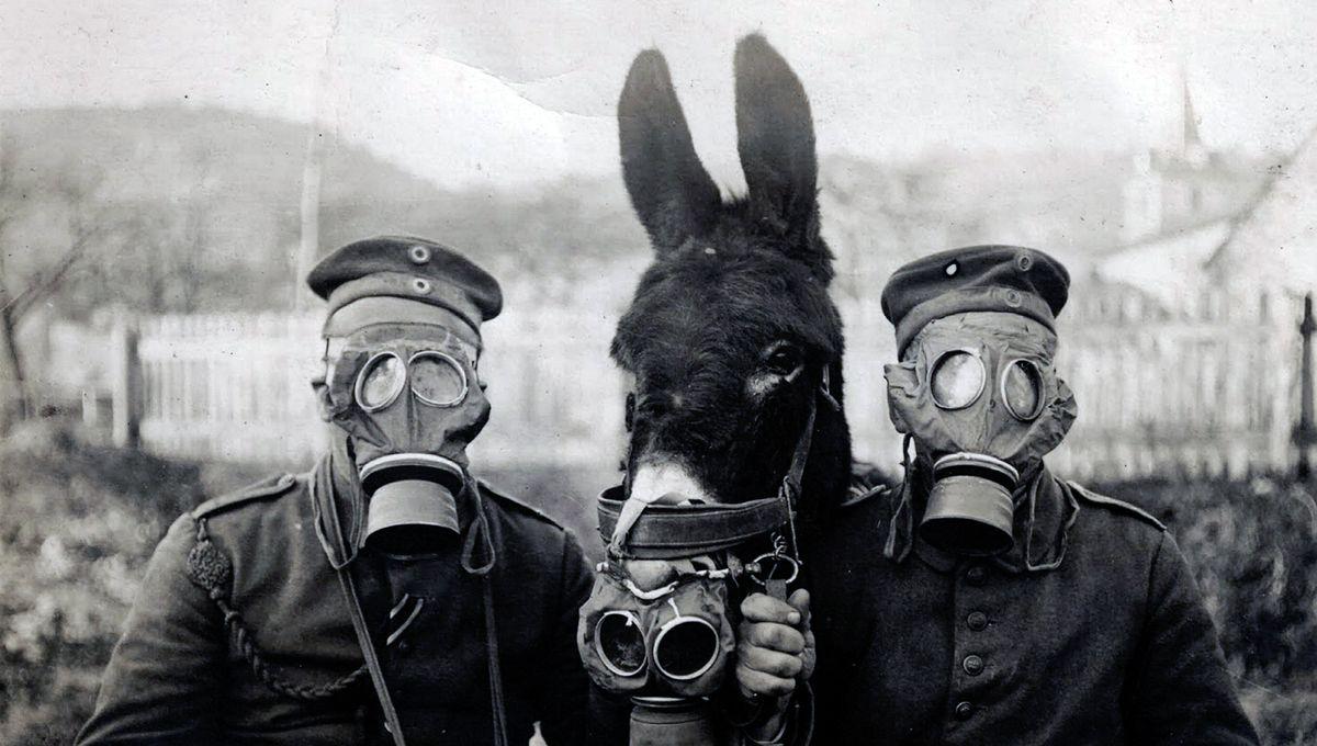 Les ânes dans la Grande Guerre