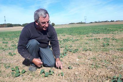 Didier Boulland est céréalier dans l'Eure-et-Loir, sur la commune du Mesnil-Simon. Il est ici sur sa parcelle de Colza où seulement un pied sur deux est sorti de terre à cause de la sécheresse.