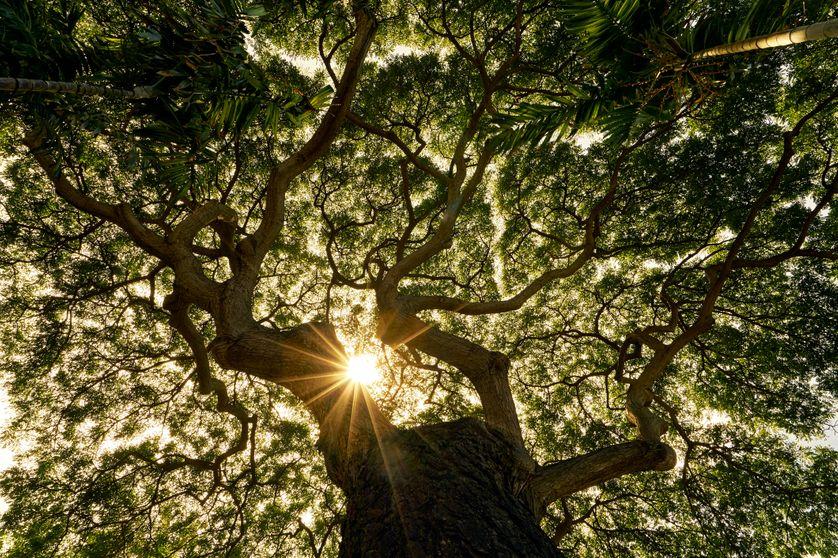 Chercheur atypique, l'ingénieur forestier Ernst Zürcher mêle science et spiritualité pour percer les liens mystérieux qui unissent l'arbre et l'homme.