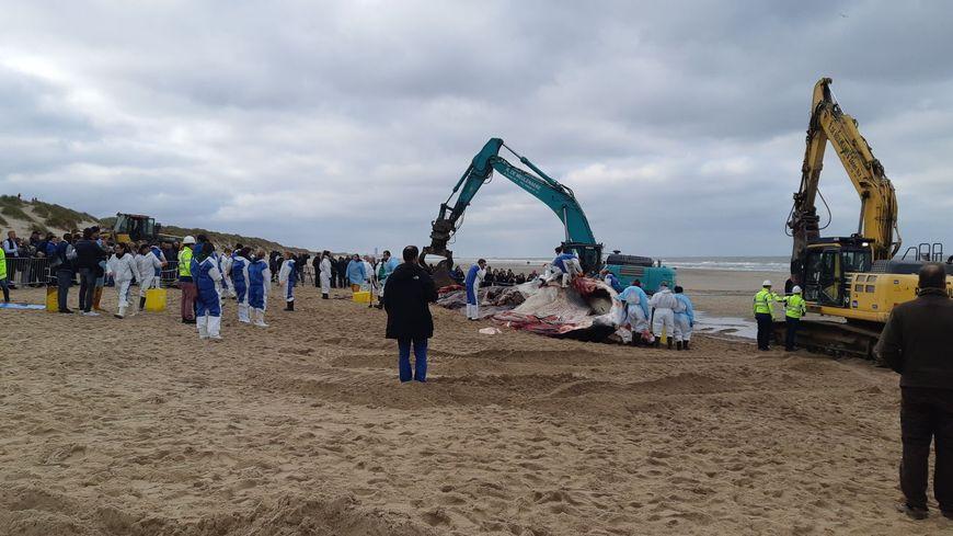 L'animal s'est échoué tôt ce matin sur la plage de De Haan