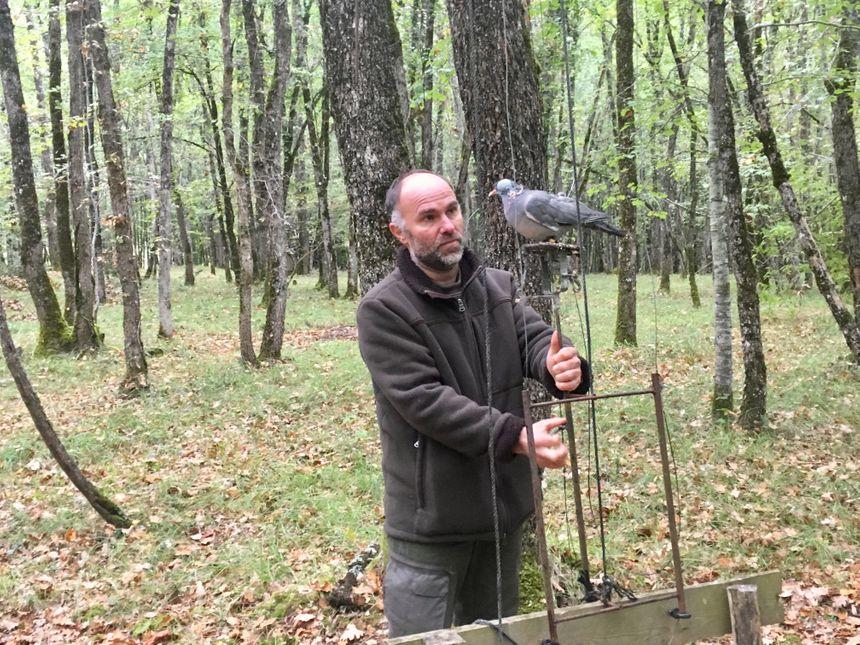 L'équipe de chasseurs utilise des palombes et des pigeons qu'ils élèvent pour attirer les vols de palombes pendant la saison.