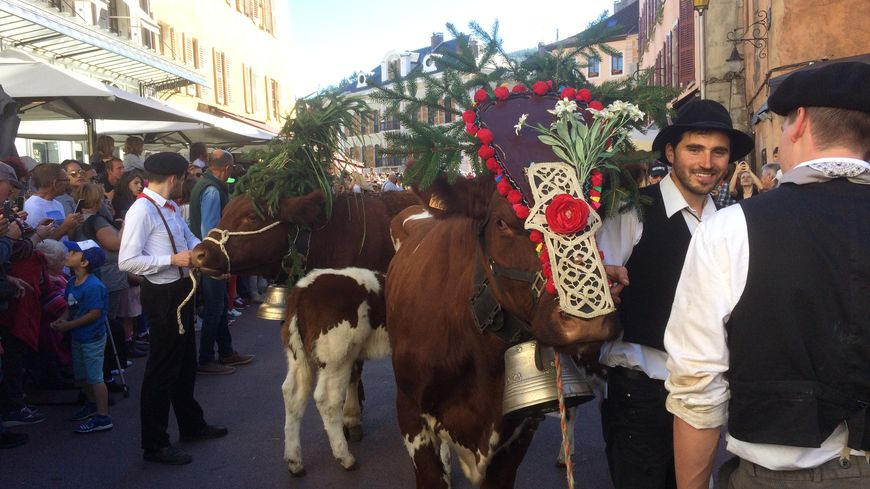 La plus belle vache du défilé se fraie un chemin sous bonne garde dans la foule