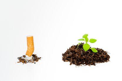 Quel est l'impact environnemental de la cigarette ?