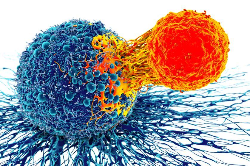 Les travaux des lauréats ont permis de développer l'immunothérapie contre le cancer