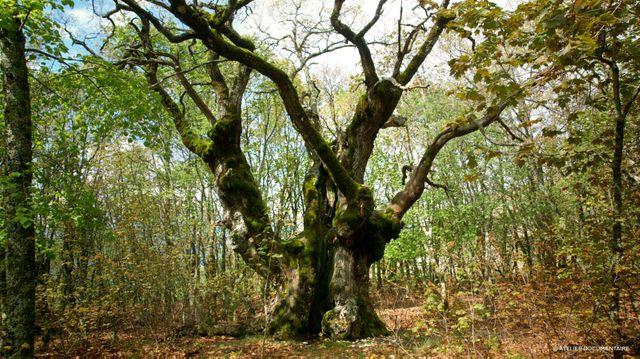 """Image tirée de """"Le Temps des forêts"""" (François-Xavier Drouet, sortie dans les salles depuis le 12 septembre 2018)"""
