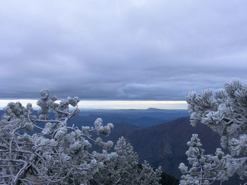 Les arbres tout blanc au sommet du Mont Aigual en Lozère