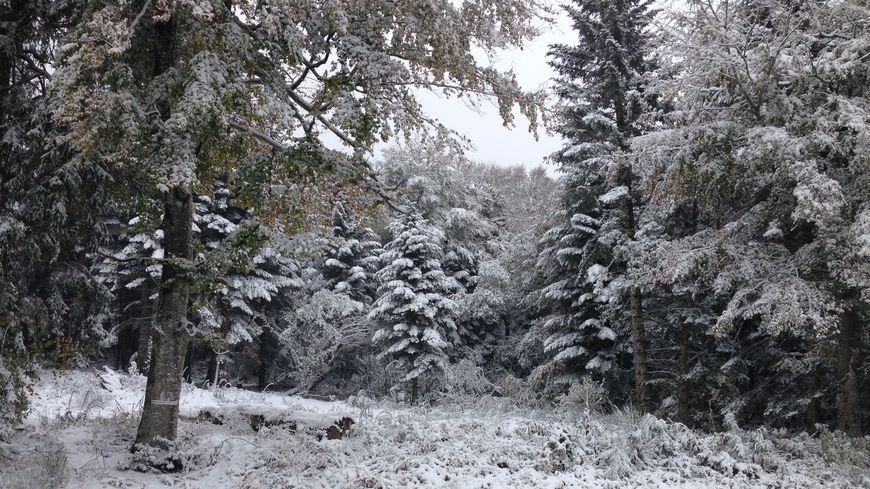 La forêt enneigée en direction du Puy de Dôme