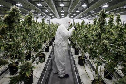 Légalisation du cannabis au Canada, les entreprises américaines pourront-elles s'y implanter ?
