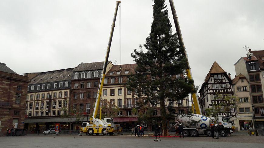 Le sapin de Noël installé place Kléber à Strasbourg, pour l
