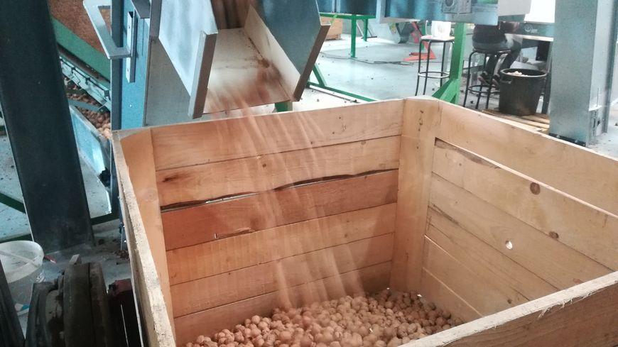 Une fois les noix lavées, séchées et triées, elles sont stockées dans de grandes caisses en bois