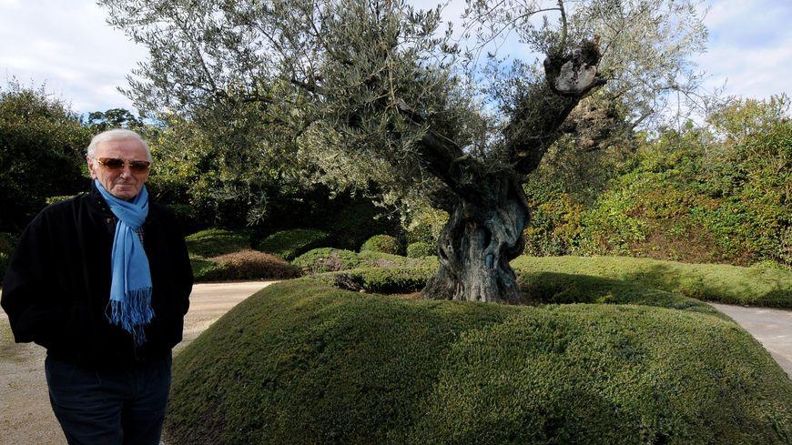 Charles Aznavour et son olivier centenaire dans sa propriété de Mouriès