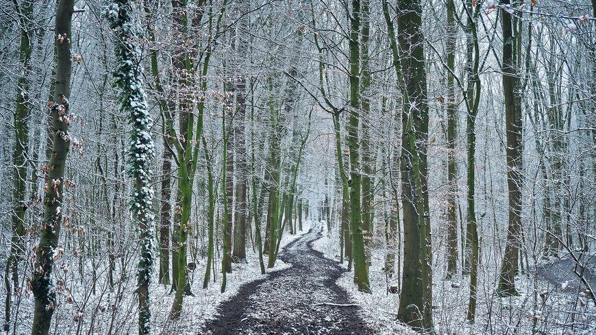 La neige devrait tomber sur des arbres portant encore des feuilles (illustration)