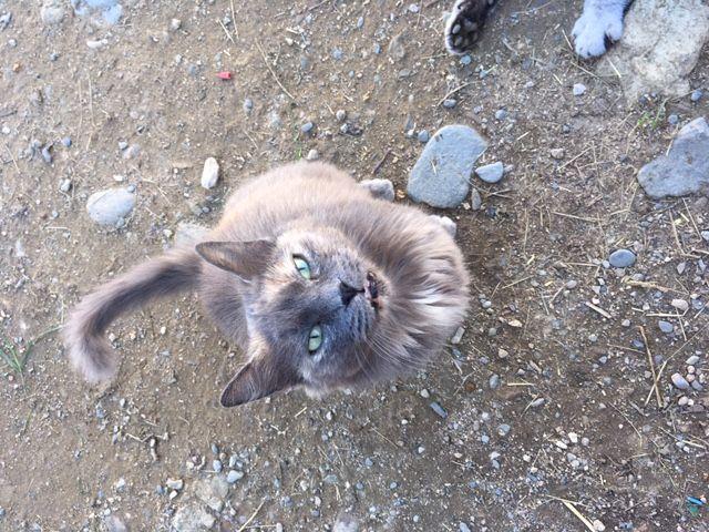 Les chats ont retrouvé un peu de sérénité depuis cet été