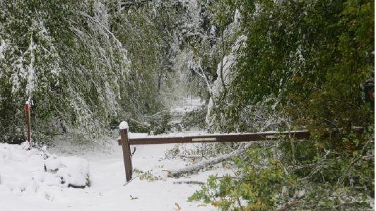 La forêt de la Comté rendue dangereuse après l'épisode neigeux