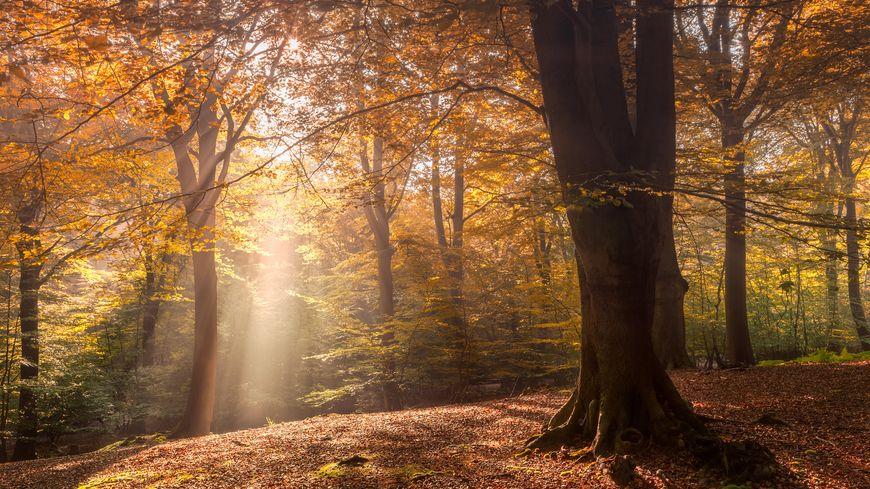 Une forêt à découvrir en automne