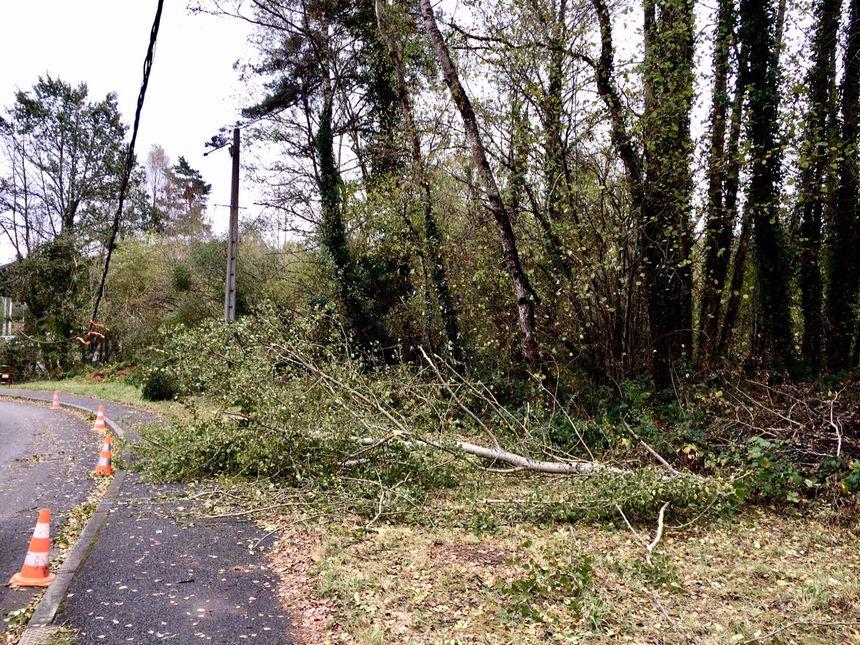 Des arbres écroulés sur la route à cause du vent et de la neige ont cassé des câbles électriques