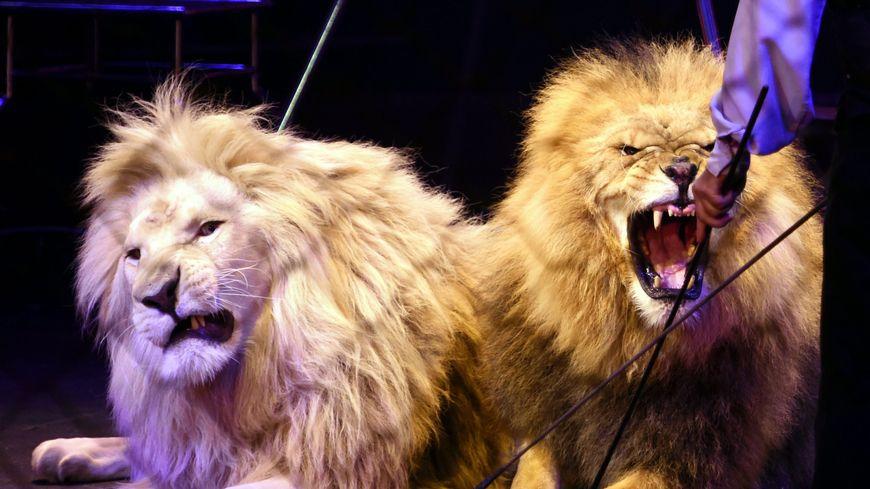 L'association de défense des cirques va porter plainte contre la ville de Montpellier