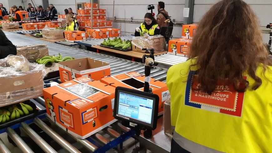 La banane française est désormais reconditionnée à Dunkerque pour être vendue à la pièce. De quoi créer au moins 150 emplois d'ici deux ans.