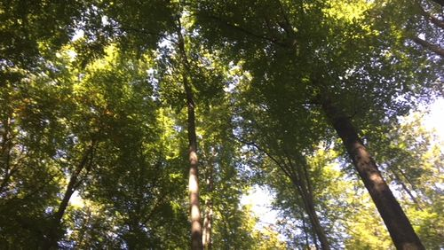 Des arbres et des hommes (1/4) : L'homme de la forêt