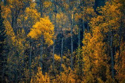 Pando Valley, USA