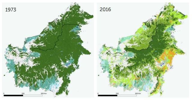 Depuis les années 70, Bornéo a perdu 40% de ses forêts.