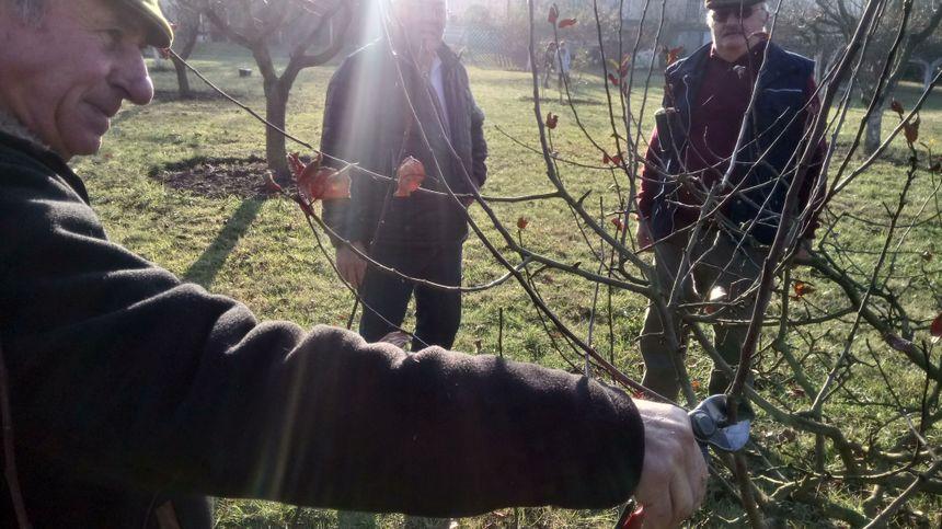 Le verger pédagogique : expliquer comment bien tailler un arbre pour avoir plus de mirabelles ou de pommes.