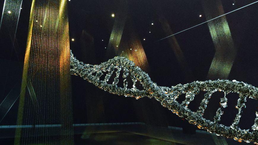 """Quelques brins d""""ADN suffisent pour savoir  à quoi ressemble quelqu'un."""