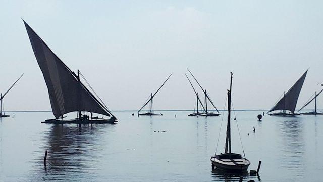Felouques sur le delta du Nil